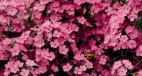 Flower Worskshop